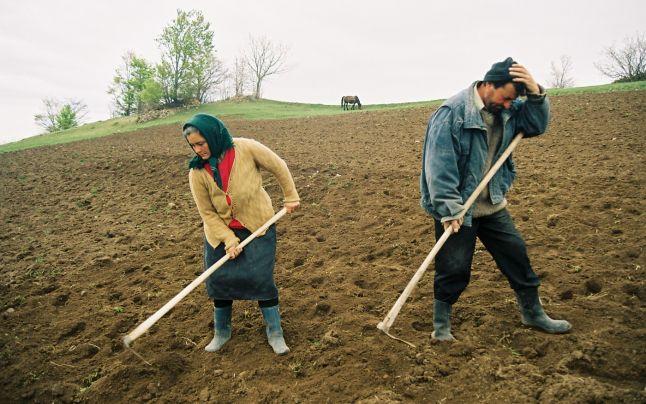 fermieri timis