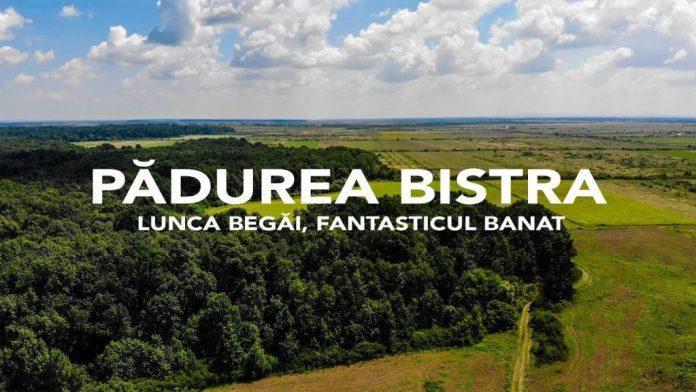 Pădurea Bistra va fi mai bogată cu 6000 de arbori